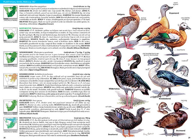 Afrikaans Roberts Field Guide  Spread