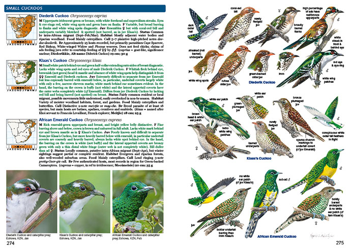 Roberts Bird Guide Second Edition